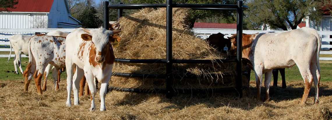 High Nitrate in Hay Killing Beef Cows in Complex Ways